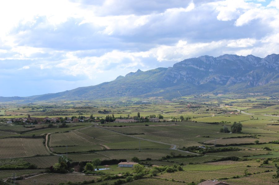 A Great Laguardia View of Rioja