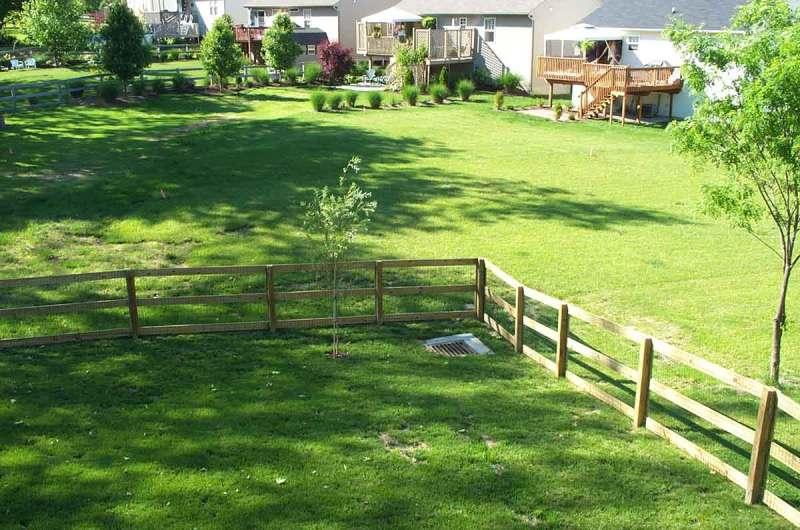 backyard lawn