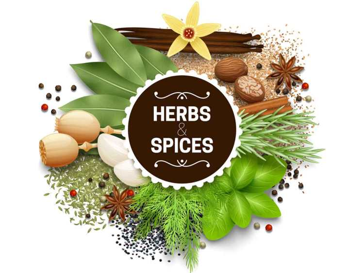 Herbs to the RESCUE! – A Glimpse of 12 Commercialized Plants of the Country