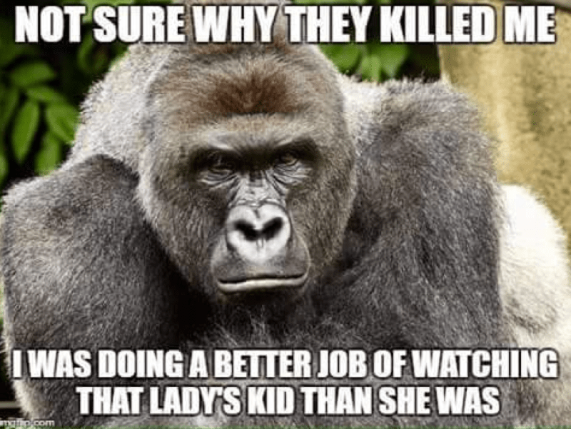 Harambe gorilla meme