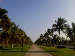 Palmtree lane, Salalah