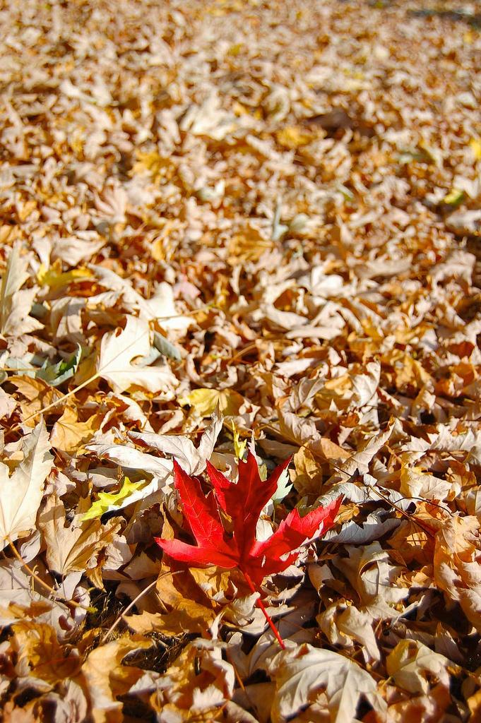 unique-leaf1