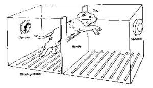 dog-shuttle-box