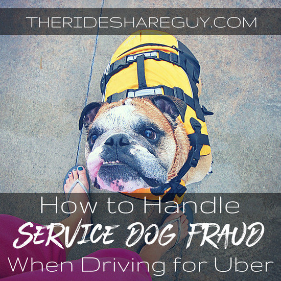 A growing issue for drivers is service dog fraud, but how can you recognize the fraud, what does the law say, and what does Uber actually do about this?