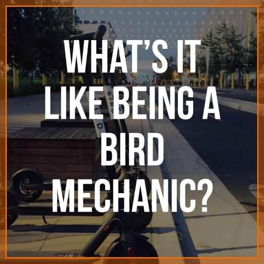 Bird scooter mechanic