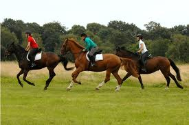 Show Me that You're Ready To Canter