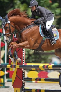 Ong Wan Ming riding a chestnut horse show jumping