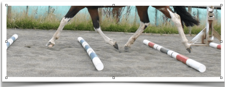 Trot Poles – the Set-up for Riding Lessons