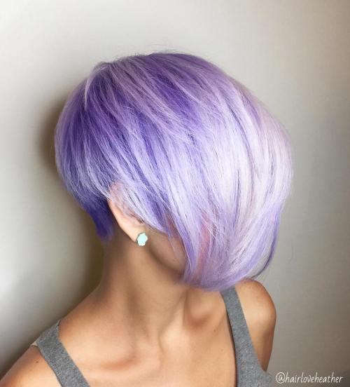 Pastel Purple Pixie Bob