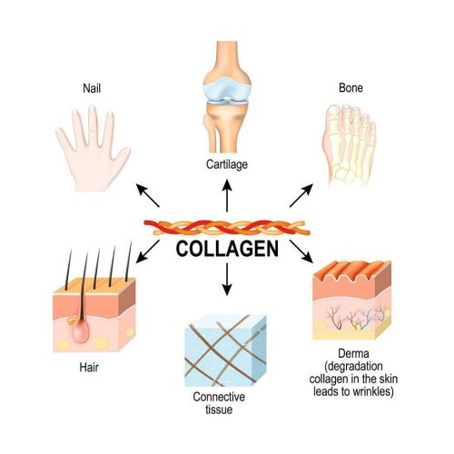 Collagen Impact On Health