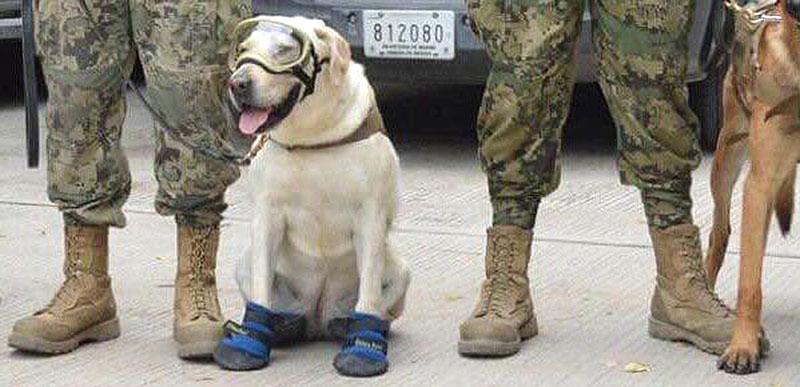 Image result for Frida rescue dog