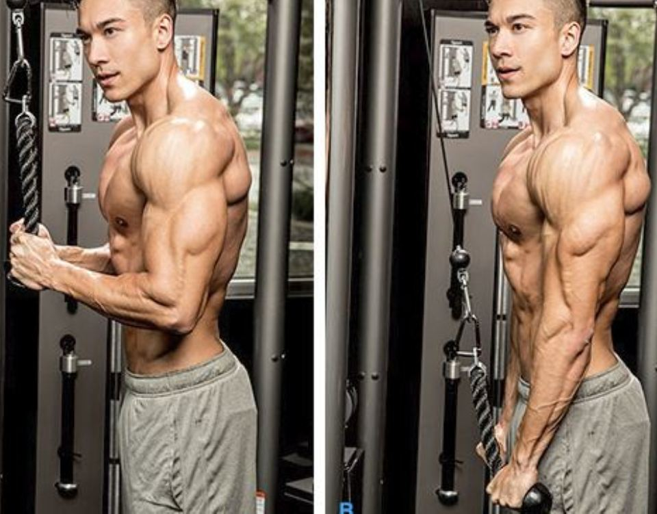 The Best Exercises For Building Perfect Triceps Therippedathlete