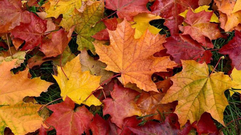 fall leaf home family autumn