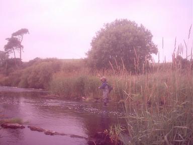 eman playing fish