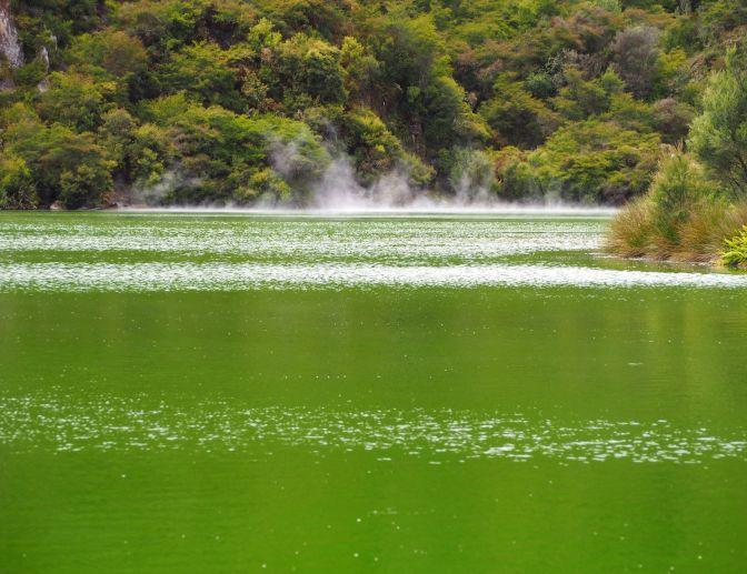 Lake Rotowhero, New Zealand