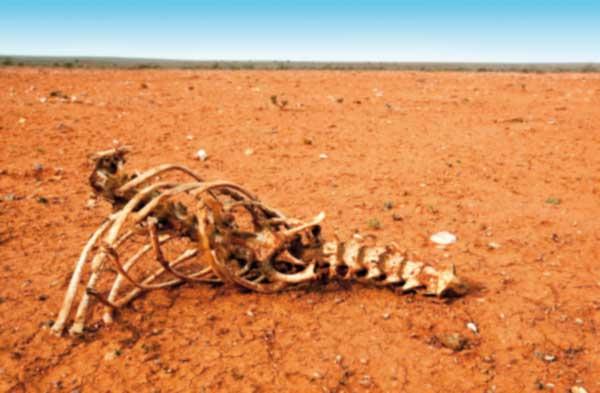 Ein Skelett eines toten Tieres in der Wüste, es ist heiß