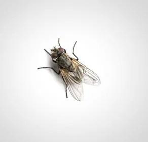 Thermo-bug vernichtet auch Schädlinge wie die Fliege
