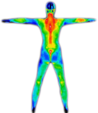 full body thermography scan image