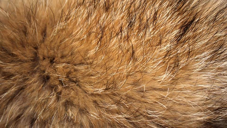 Thermal Conductivity Testing Applications Fur