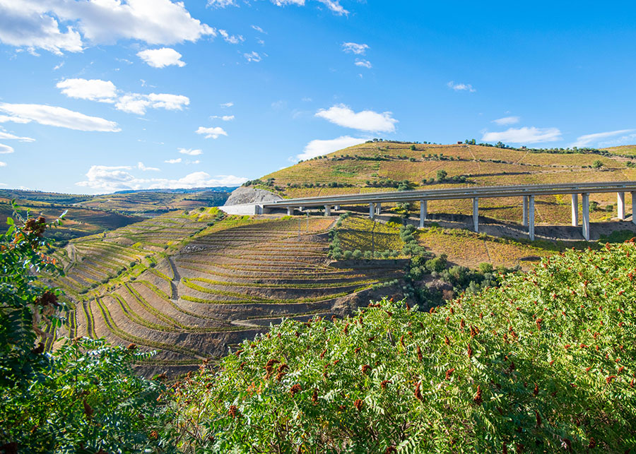 Beautiful terraced vineyards of the Douro Valley