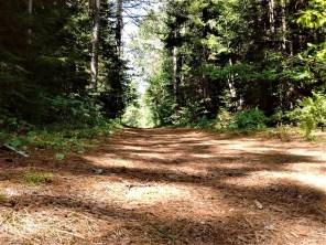 buck_pond_trail_pine_needles