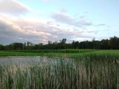 buttonwood_pond