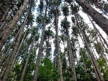 pine_sky_whetstone
