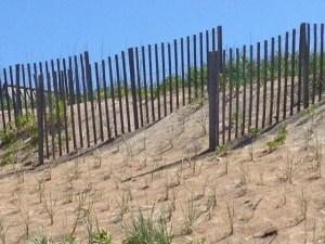 Dunes closeup