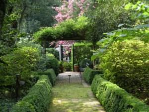 Clarkson garden pink trees