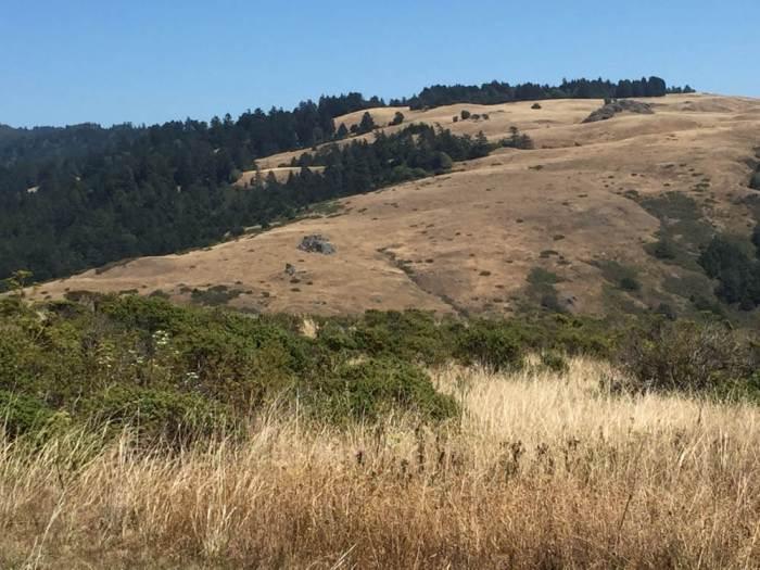 Sonoma Coast hill