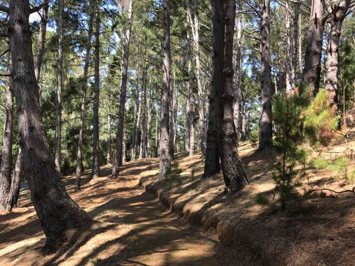 Marconi Historic State Park trail