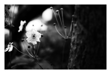 flower-two