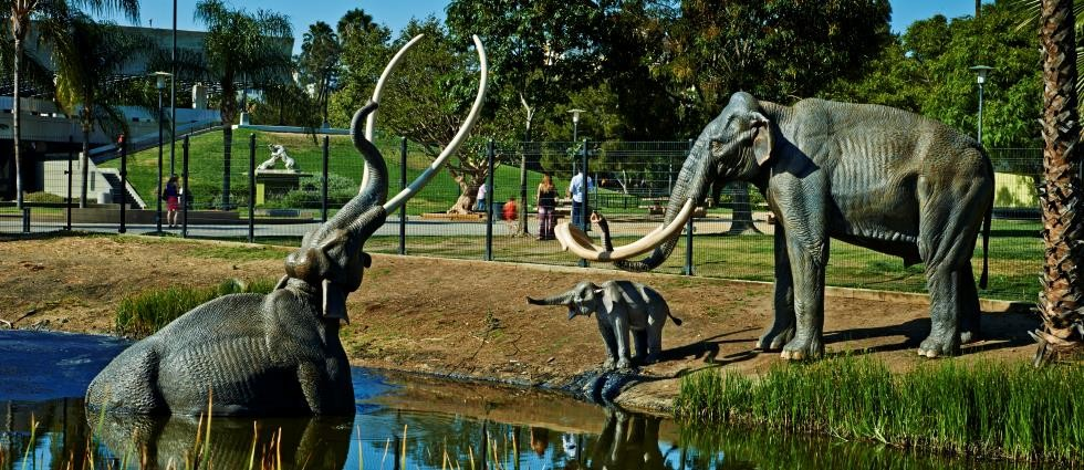 family-friendly-activities-in-los-angleles