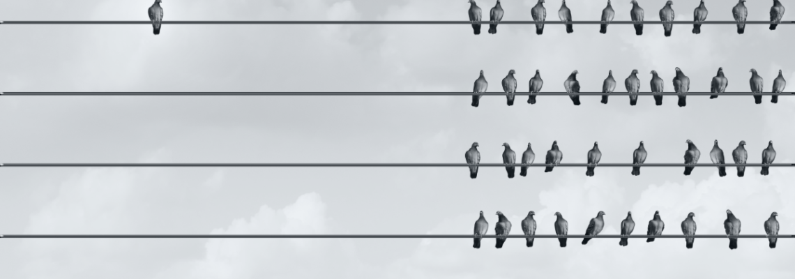 A flock of pigeons on wires, where one pigeon is by themselves.