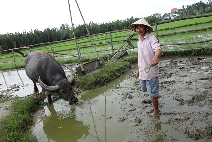 Rice farming tour in Hoi An. 3 weeks in Vietnam, Vietnam itinerary: 3 weeks, 3 week Vietnam itinerary