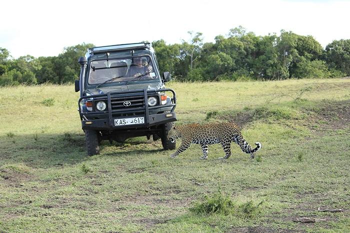 Spotting a leopard on safari, Backpacker Kenya Safari, Tanzania budget safari, Backpackers Africa, Kenya budget safari, Affordable African safari, Safari on a budget, African safari on a budget