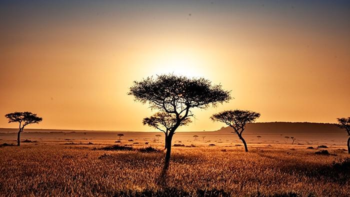 Sunset on the savanna, Backpacker Kenya Safari, Tanzania budget safari, Backpackers Africa, Kenya budget safari, Affordable African safari, Safari on a budget, African safari on a budget