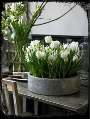 tulip6