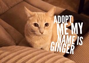Adopt Ginger