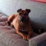 Oscar The Victory Dog