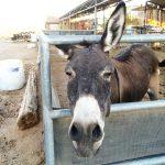 Donkey Boulder City