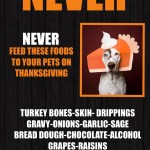 Thanksgiving food dangers for pets