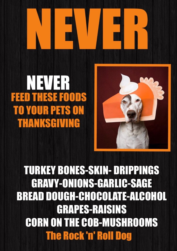 never let your pets eat these foods at Thanksgiving