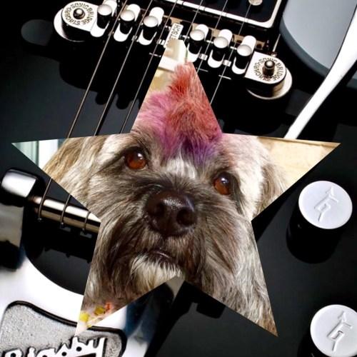 Mr. Twix Rockstar Dog #petsmartgrooming #ad