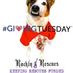Giving Tuesday Rockin 4 Rescues