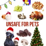 Ten Holiday Foods And Plants Harmful To Pets