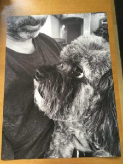 Mr Tiwx engineer print Staples pet gallery portrait