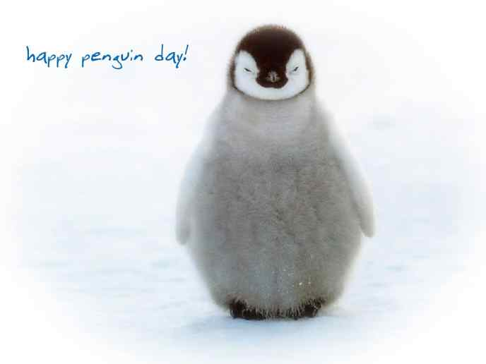 penguin day 1