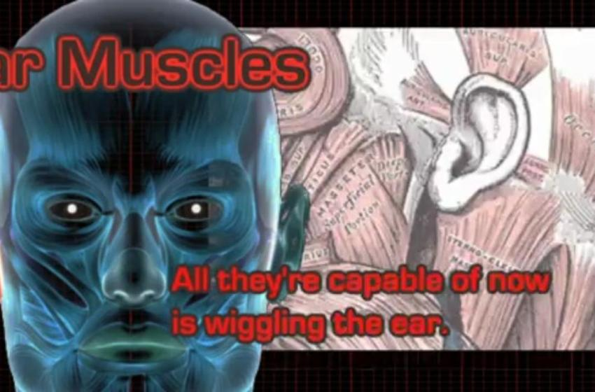 10 Useless Human Body Parts