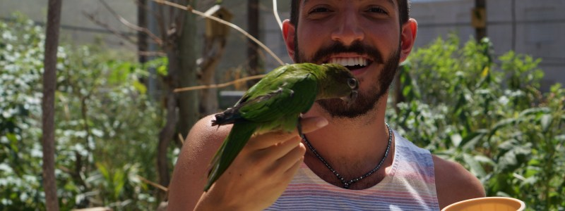 Feeding Birds at Saint Martin's Parrotte-Ville Bird Park